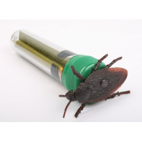 Cockroach petlingset
