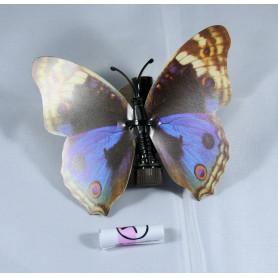 Vlinder cache - 20