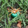 Spin petlingset - oranje